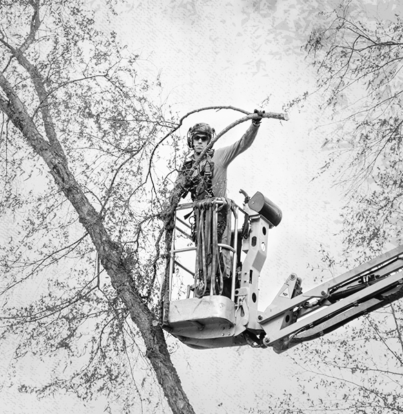 Tree Care and Aroborist Industry Gear from Columbia Safety and Supply